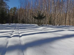 Первая проба зимы